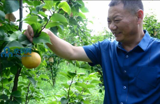 阆中-振兴乡村经济发展与